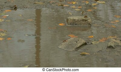 yellow leaves floating in pool is stone brick autumn