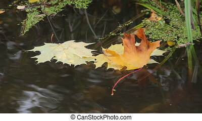 Yellow leaves floating on the river