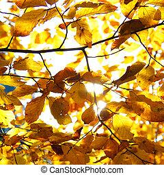 Yellow leaves illuminated by straig