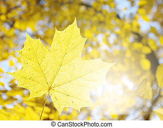 Yellow leaves in a sunlight