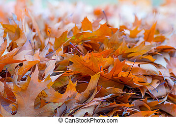 Yellow leaves in autumn background
