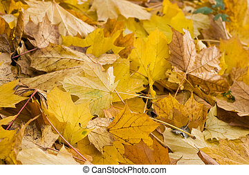 Yellow leaves in autumn - horizontal