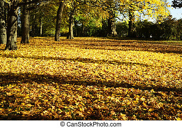 yellow leaves in autumn in the park on a sunny day