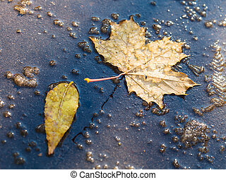 yellow leaves in puddle from melting first snow