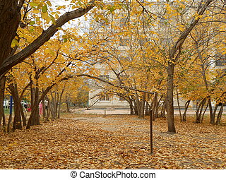 Yellow leaves in the city