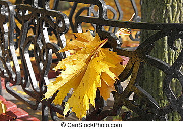 Yellow leaves in the park