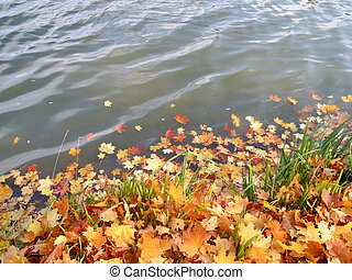 yellow leaves in water