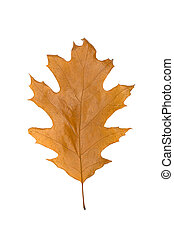 yellow leaves isolated on white background