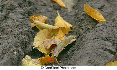 yellow leaves lie in mud soil in autumn background