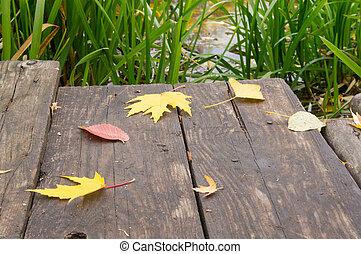 Yellow leaves lie on the bridge