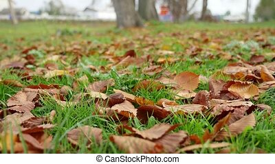 yellow leaves lie on the green grass lawn autumn nature...