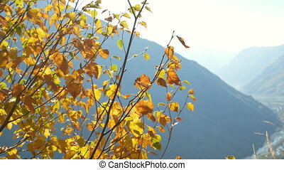 Yellow leaves mountains - Autumn forest with fallen red...