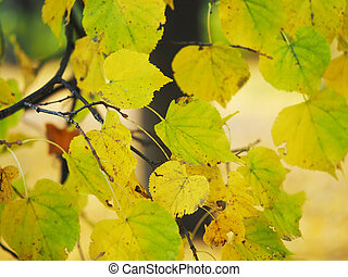 yellow leaves of elm in the park. autumn