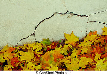 Yellow leaves of the maples had fallen near the stucco old wall.