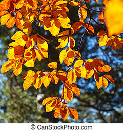 Yellow leaves on a branch. Autumn landscape.