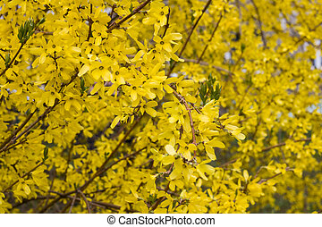 Yellow leaves on a branch of a tree