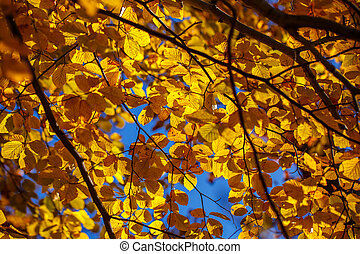 Yellow leaves on a branch of a tree.