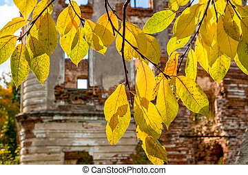 Yellow leaves on a tree on a sunny autumn afternoon in the park