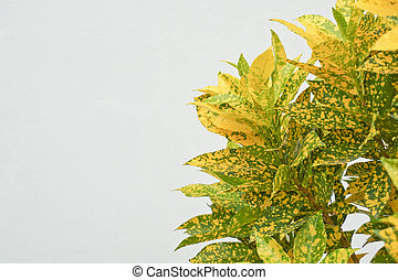 Yellow leaves on a white background. Autumn