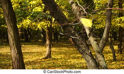 yellow leaves on a wind at the autumn forest