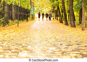 Yellow leaves on asphalt in autumn