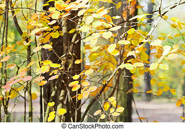 yellow leaves on branches in autumn