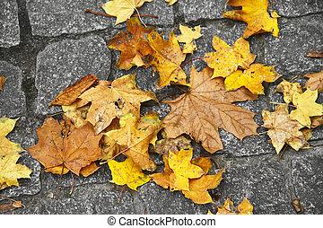 Yellow leaves on cobblestone pavement, autumn