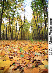 Yellow leaves on earth in park, ready for humus