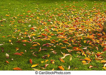 yellow leaves on green grass, Copy space