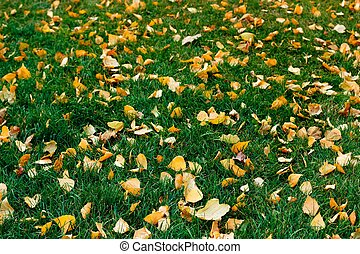 Yellow leaves on green grass in autumn