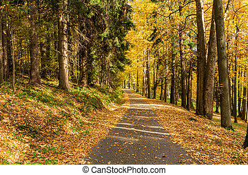 Yellow leaves on the alley in autumn forest