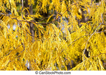 yellow leaves on the autumn nature