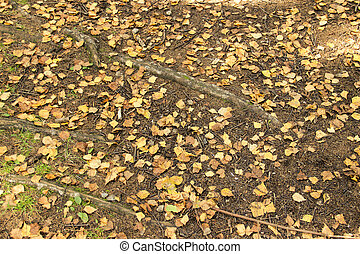 Yellow leaves on the ground in the