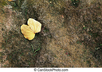 Yellow leaves on the ground.