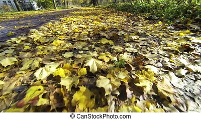 Yellow leaves on the road.