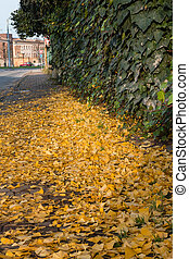 yellow leaves on the sidewalk in city