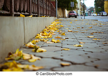 Yellow leaves on the sidewalk in the city