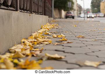 Yellow leaves on the sidewalk