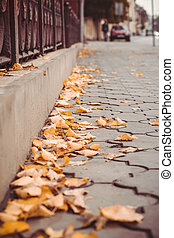 Yellow leaves on the street