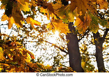 yellow leaves