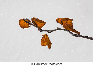 yellow leaves on the white snow