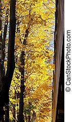 yellow leaves on tree near house in Ferrara in autumn