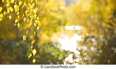 Yellow leaves swaying in the wind