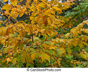 Tree with yellow leaves at fall