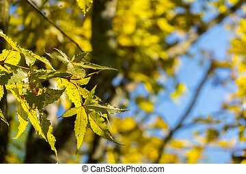 yellow leaves under blue sky