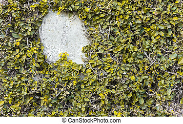 Yellow leaves wall background texture