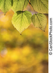 Yellow leaves with abstract background in autumn