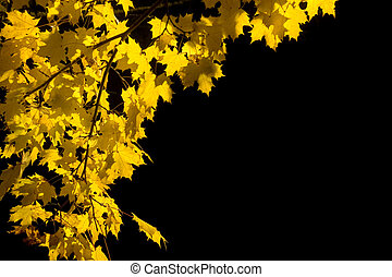 Yellow maple leaves in a park at night.