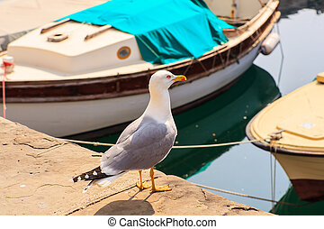 Yellow-legged gull - View of yellow-legged gull in the...