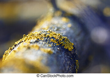 Yellow lichen growing on the bark of a tree